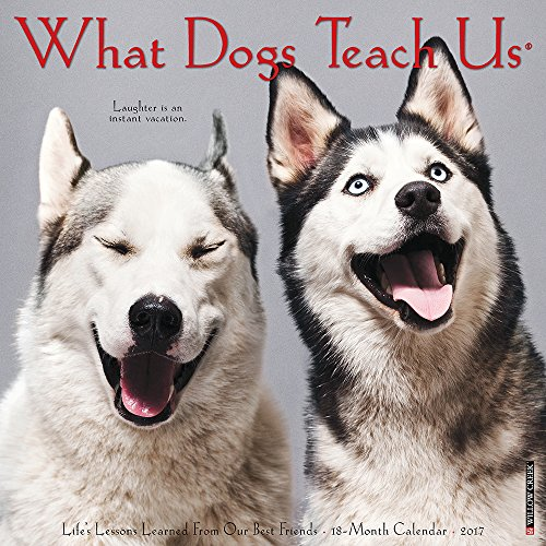 What Dogs Teach Us 2017 Wall Calendar