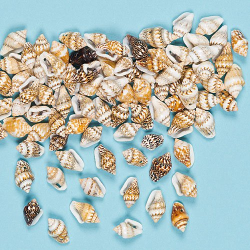 mini-craft-shells-12mm-with-hole-for-threading-kids-craft-activities-jewellery-making-pack-of-200
