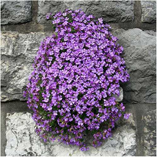 Beautiful flowers around your home.