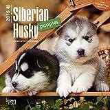Siberian Husky Puppies 2016 Calendar