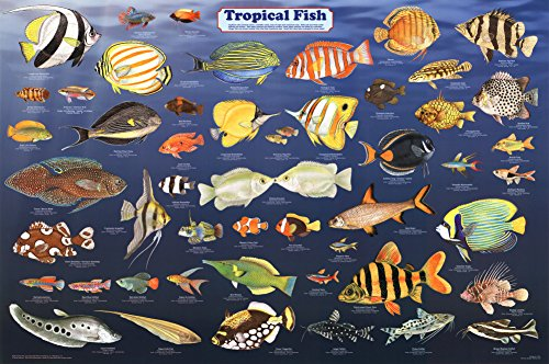 Laminated Tropical Fish Educational Science Chart Poster Laminated Poster 24 x 36in (Aquarium Fish Chart compare prices)