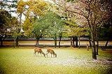 Walking around Japan - Nara (Photo Gallery)