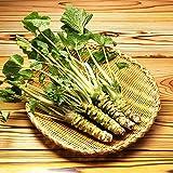 家庭菜園の植物vegetablesfor 100個わさびの種わさびの種
