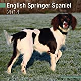 Avonside Publishing English Springer Spaniel 2014 (Calendar 2014)