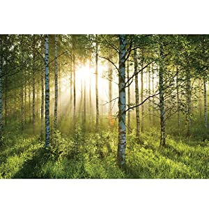 Sunrise in the Forest Wallpaper Mural from SHH Interiors