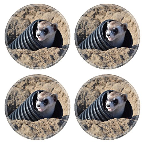 Liili Round Coasters Black footed Ferret Release at Rocky Mountain Arsenal National Wildlife Refuge Natural Rubber Material Image 21976476096