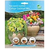 G Plants Easy Gardening Seed Mats Patio Containers Colour Cocktail