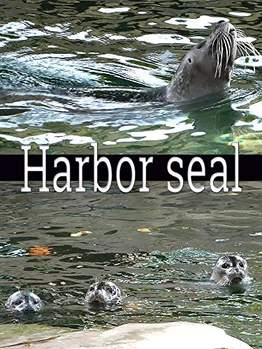 Harbor seal on Amazon Prime Instant Video UK