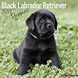 Lab Puppies Calendar - Black Labrador Retriever Puppies Calendar - Dog Breed Calendars 2017 - Dog Calendar - Calendars 2016 - 2017 wall calendars - 16 Month Calendar by Avonside