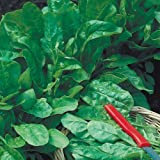 Suttons Seeds 185629 Perpetual Spinach Leaf Beet Seed Tape