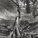 Ancient Trees: Portraits of Time by Beth Moon