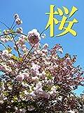 桜-写真集