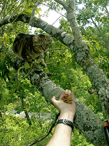 Millie the Cat in a Tree Evading Rescue