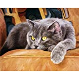 ABEUTY DIY Paint by Numbers for Adults Beginner - Cat on The Sofa 16x20 inches Number Painting Anti Stress Toys (No Frame) (Color: Gray Cat, Tamaño: No Frame)