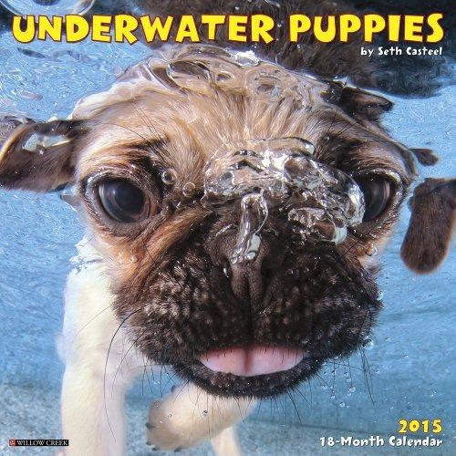 By Seth Casteel Underwater Puppies 2015 Mini Calendar