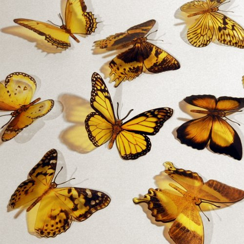 Butterfly 3D YELLOW Butterflies Translucent Decoration 15 count - 1