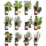Kit aromathérapie - Lot de 12 huiles essentielles 10ml 100% pures et naturelles H.E.B.B.D. Qualité controlée France