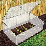 Mini-serre de jardin casa pura® Planta | en polycarbonate résistant + incassable | stabilisé UV, résistant aux intempéries | 100x60x40cm