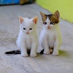 Cute Cats [Blu-ray]
