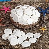 Natural Sand Dollars in Basket