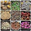ADB Inc DD Mixed 9 Types of Lithops Germany Kk\'s Indoor Bonsai Seeds