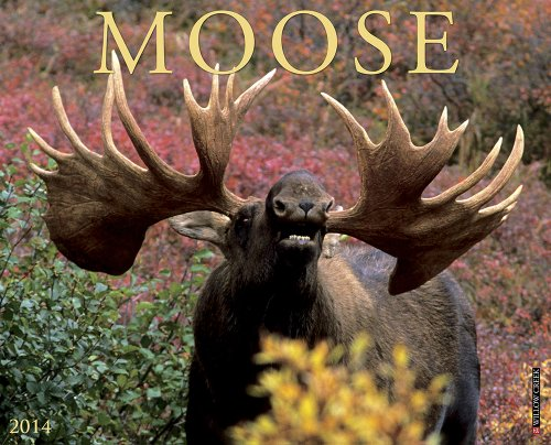 Moose 2014 Calendar