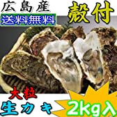 広島産殻付き 生牡蠣(カキ) 大粒2kg(20個程度)贈答用化粧箱入 ≪加熱調理用≫ 生かき 生カキ