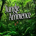 Jungle Habitat for Deep Sleep and Relaxation (Nature Sound)
