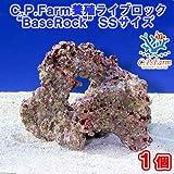 """(海水魚)C.P.Farm 養殖ライブロック""""BaseRock"""" SSサイズ 1個(形状お任せ) 本州・四国限定[生体]"""