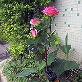 Crazy Genie Rose Flower Solar LED Solar Topiary Lights Wedding Porch Deck Yard Garden Decor Decorative Landscape (pink)