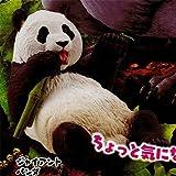 カプセルQミュージアム 珍獣動物園2 5:ジャイアントパンダ 海洋堂 ガチャポン