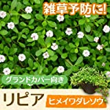 【ノーブランド品】 リピア(ヒメイワダレソウ) / 9cmポット 32本セット