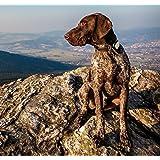 GPS pour chien, chat, KIPPY BLEU avec un an d'abonnement inclus.