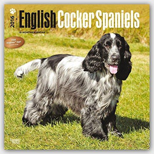English Cocker Spaniels 2016 Wall