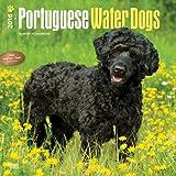 Portuguese Water Dogs 2016 Square 12x12 (Multilingual Edition)