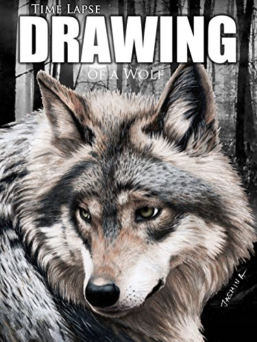 Clip: Time Lapse Drawing of a Wolf