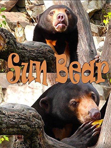 Sun bear on Amazon Prime Instant Video UK