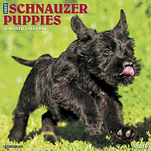 2016 Just Schnauzer Puppies Wall Calendar