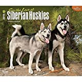 For the Love of Siberian Huskies 2015 Deluxe Wall Calendar