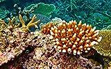 Photo Gallery: Beauty of The Great Barrier Reef in Australia (Travel books # 23): (Photo Books,Photo Album,Photo Display,Photo Journal,Photo Magazines,Photo Story,Photo Traveler,Travel