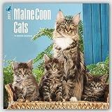 Maine Coon Cats - Hundekatzen 2017 - 18-Monatskalender: Original BrownTrout-Kalender [Mehrsprachig] [Kalender] (Wall-Kalender)