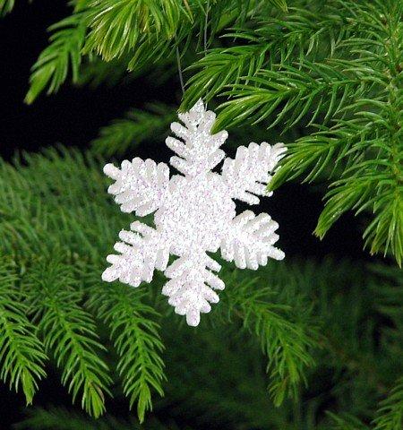 Norfolk Island Pine -Christmas Tree