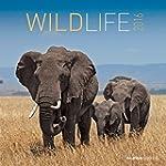 Wildlife 2016 - Brosch�renkalender (3...