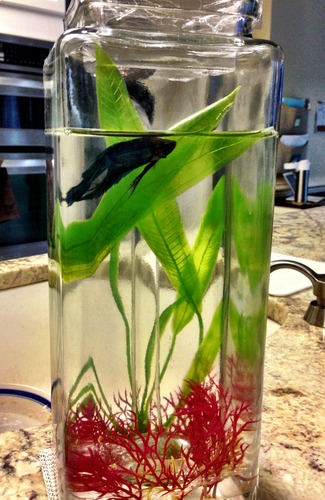 Noclean aquarium self cleaning betta fish for Self cleaning betta fish tank