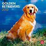 Golden Retrievers 2013 Square 12X12 W...