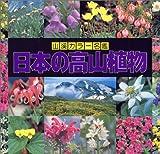 日本の高山植物 (山渓カラー名鑑)