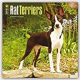 Rat Terriers 2016 Calendar