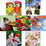 Greeting Cards collection, Photographic Fun - 7 wacky birthday cards. Premium quality blank and birthday cardsby Tracks Publishing,...