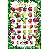Modern Apples Poster