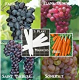 Bulk 4 Grape Vine Seeds Survival Seeds 190 Seeds Upc 646263360811 + 5 Plant Markers